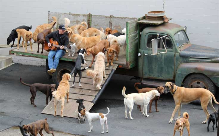 Man playing guitar for the group of dogs