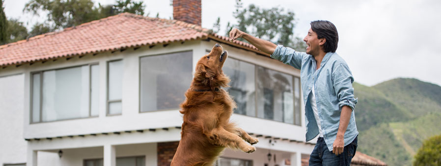 Training a dog to jump for a treat