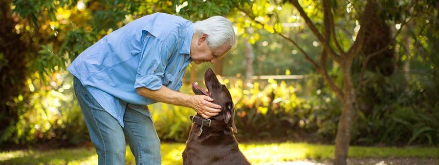Man petting a dark brown labrador retriever